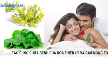 Tác dụng chữa bệnh của hoa thiên lý và rau mồng tơi 8