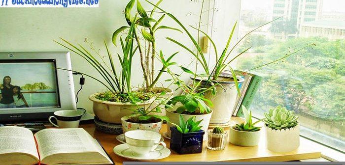 7 loại cây để bàn làm việc thanh lọc không khí, giảm bức xạ