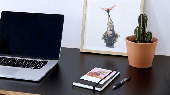 Lựa chọn cây xương rồng cho bàn làm việc của bạn
