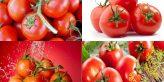 tác dụng của cà chua đối với nam giới