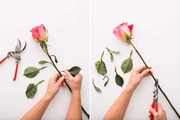 Chuẩn bị nguyên vật liệu để cắm Hoa Hồng