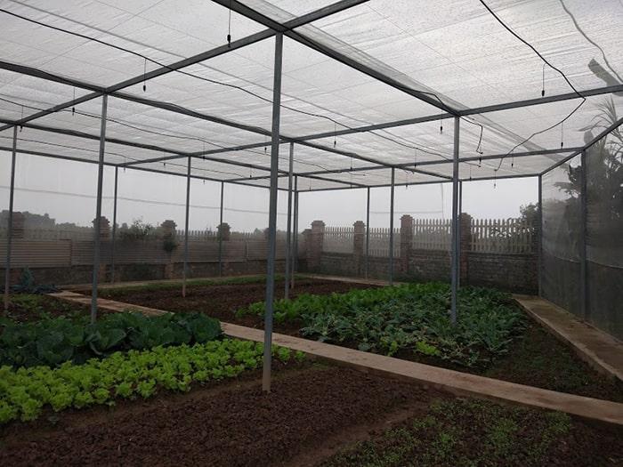 Nhà lưới trồng rau thông thường có kinh phí tiết kiệm