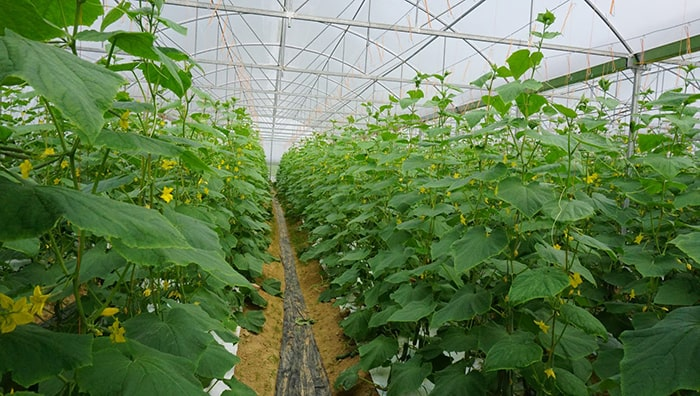 Bảng giá nhà lưới dùng để trồng dưa