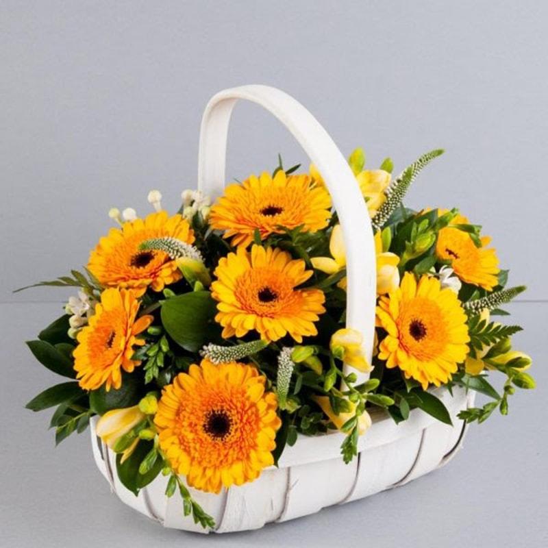 Hoa đồng tiền là loại hoa rất ý nghĩa chúc mừng ngày doanh nhân