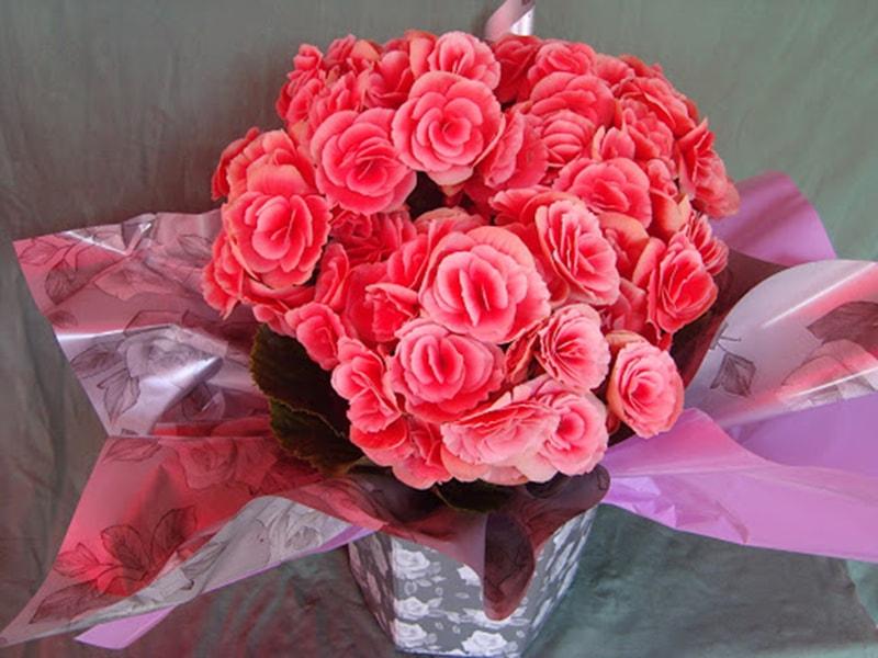 Hoa hải đường là loại hoa rất ý nghĩa chúc mừng ngày doanh nhân