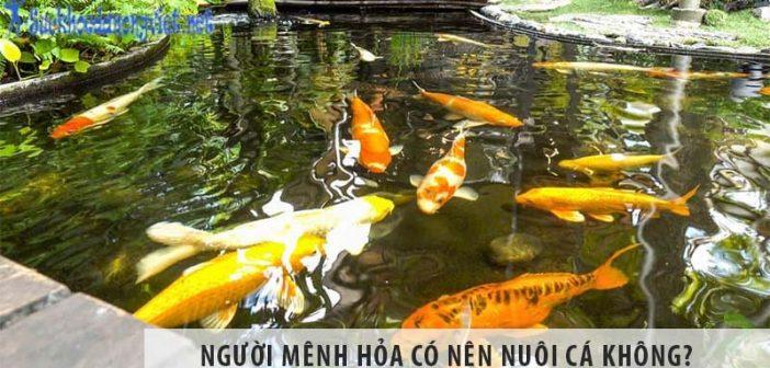 Người mệnh Hỏa có nên nuôi cá không?