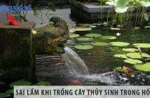 5 sai lầm khi trồng cây thủy sinh trong hồ cá Koi