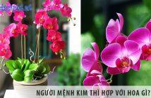 Người mệnh Kim thì hợp với hoa gì?