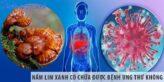 Nấm lim xanh có chữa được bệnh ung thư không?